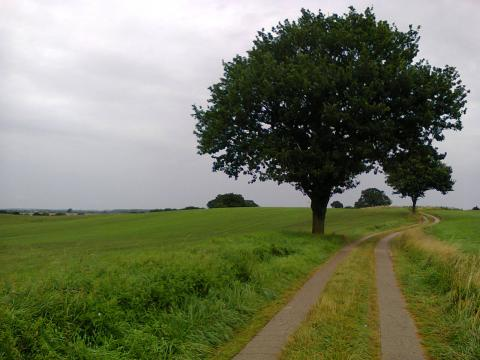 field way in North Germany